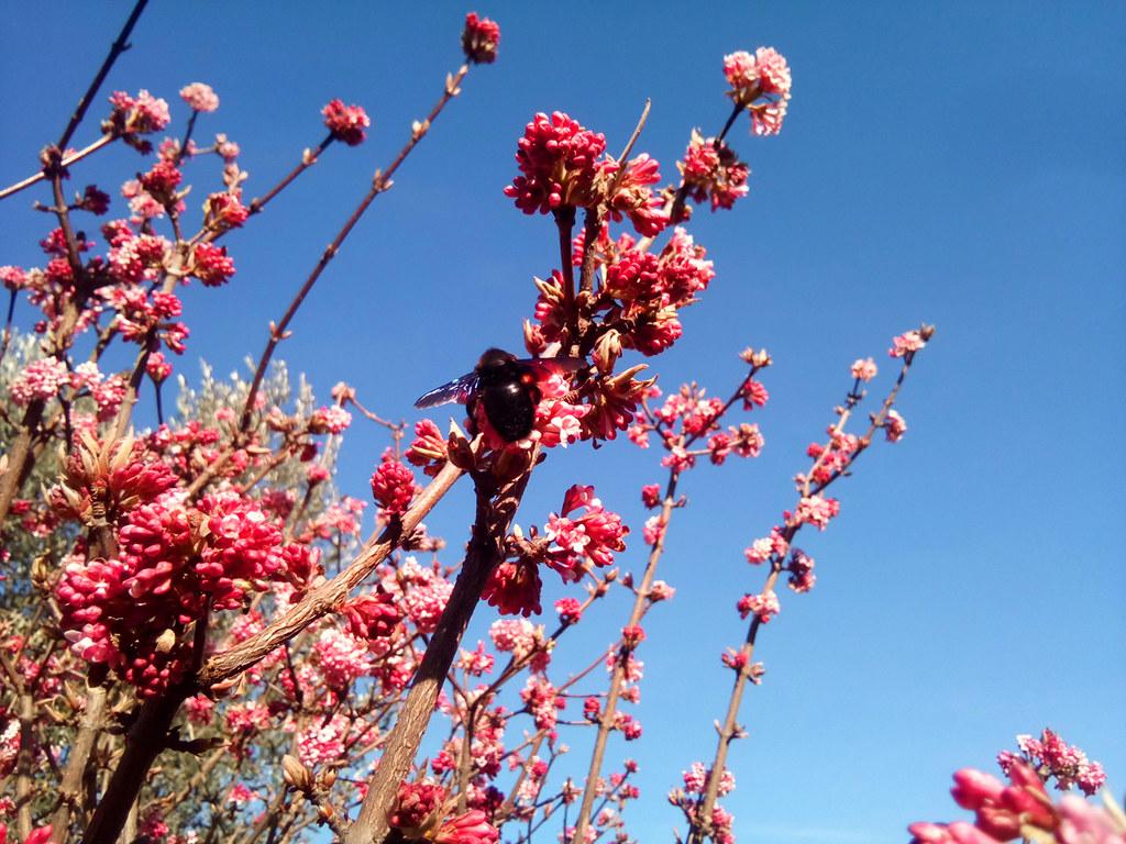 Au printemps, Ô printemps, Ohh... printemps !